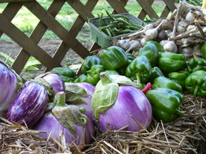 eggplant and green peppers